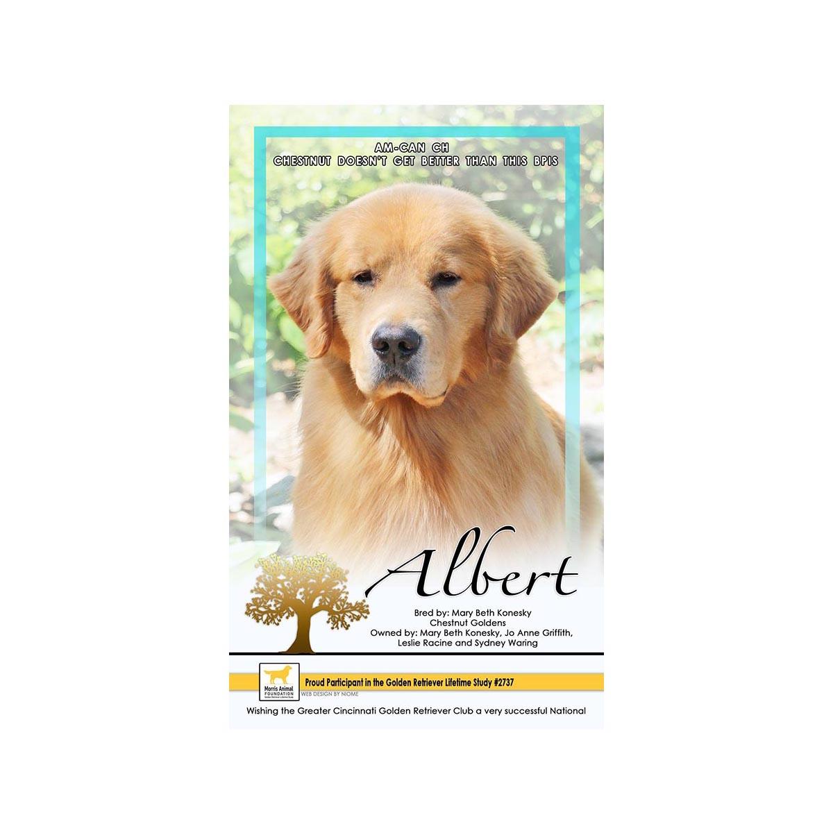 Golden Retriever Stud Dog - Am CH Can BIS RBIS GCH Chestnut